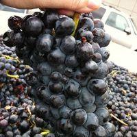 32 vini top a Torino Piemonte